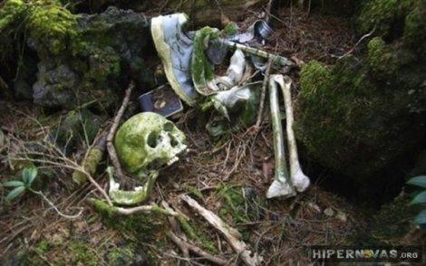 a floresta japonesa dos suicidas hipernovas (7)