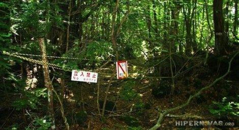 a floresta japonesa dos suicidas hipernovas (9)