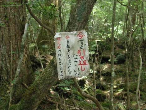aokigahara-jukai