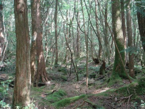 floresta-aokigahara