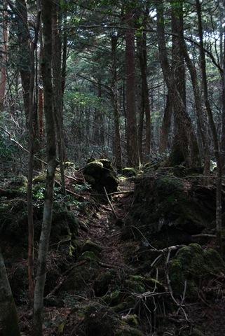 floresta2[3]