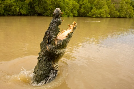 crocodilo-australia-5