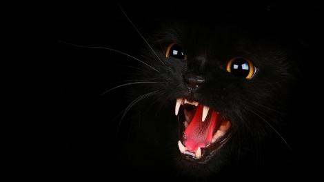 Bad-Black-Cat-Wallpapers