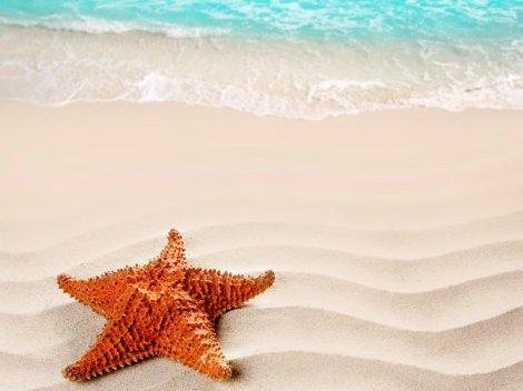 327119__starfish_p