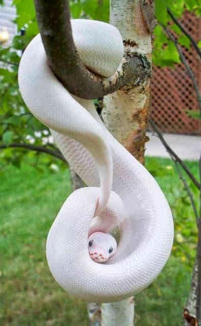Curiosidades-Sobre-as-Cobras-7.jpg